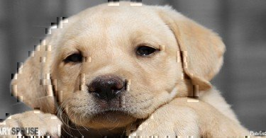 5-things-to-consider-before-adopting-a-pet