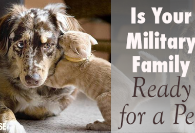 is-your-military-family-ready-for-a-pet?