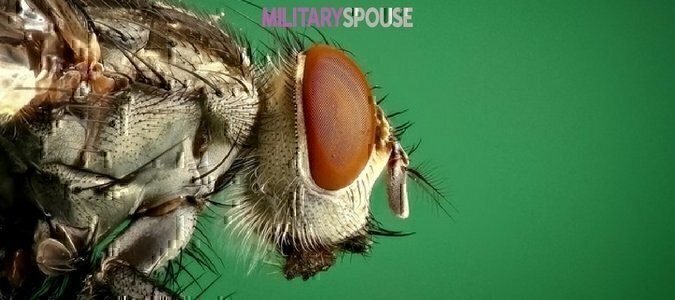 41 US military members have no contracted Zika