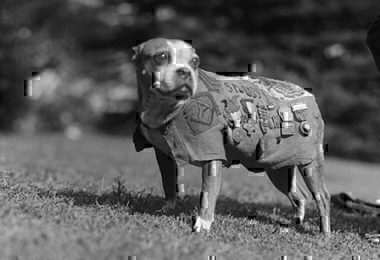 Pioneer Services dog